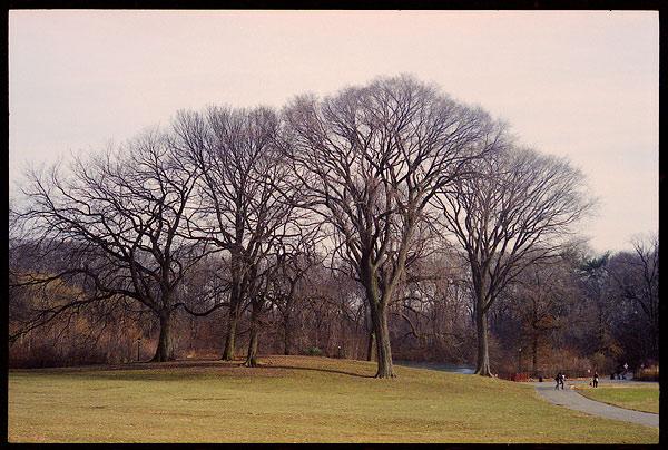 leica_park-trees1.jpg